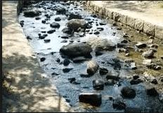 水遊びが楽しめるじゃぶじゃぶ池、公園、プール(昆陽池公園の施設内の小川)