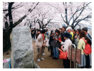 淀川河川公園背割堤地区の桜のお話ツアー