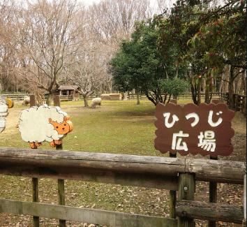 大泉緑地公園のひつじ広場